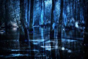 Что скрывает мрак череповецких болот