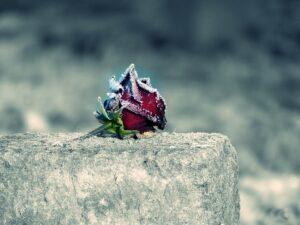 Погребённая заживо